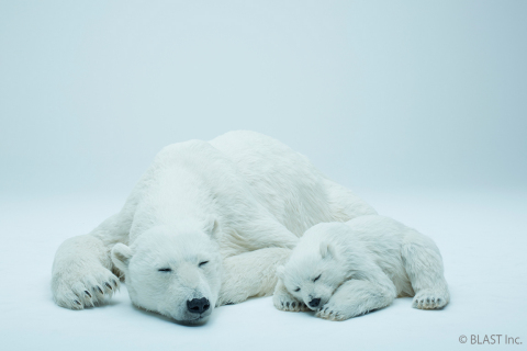 Polar bear 2 (Photo: Business Wire)