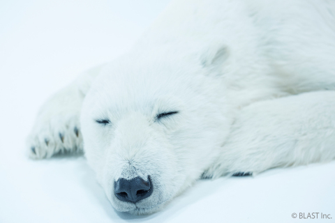 Polar bear 3 (Photo: Business Wire