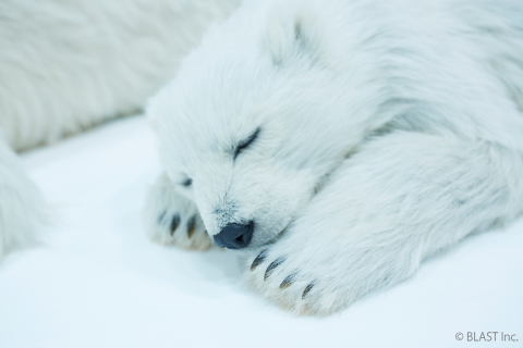 Polar bear 4 (Photo: Business Wire)