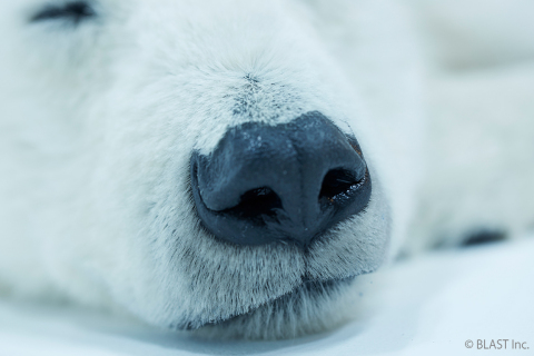 Polar bear 6 (Photo: Business Wire)