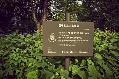 树木星球 Tree planet 与粉丝们共同进行的环保活动 明星树林 在世界范